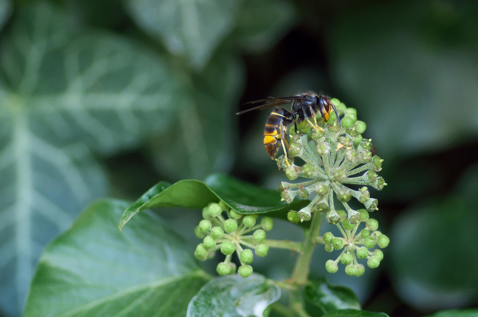 Gestión de especies exóticas invasoras