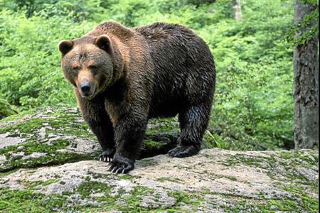 La fauna como clave en la adecuada gestión de la Biodiversidad