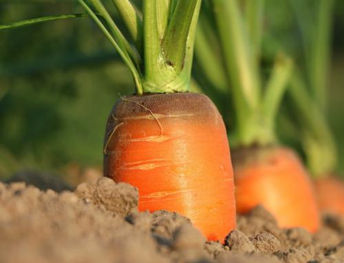 La agricultura ecológica en España
