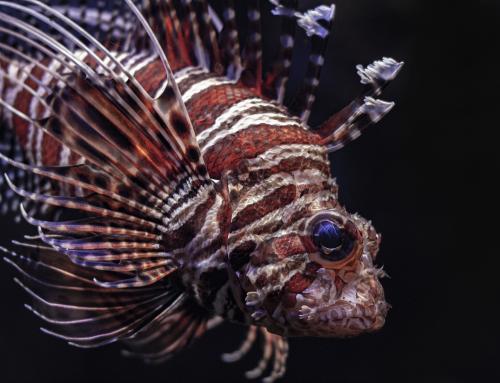 Todo lo que debes saber sobre las especies exóticas invasoras