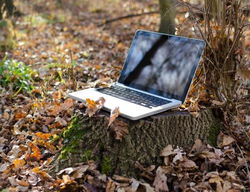 100 árboles por cada curso: Sostenibilidad más allá del aula virtual