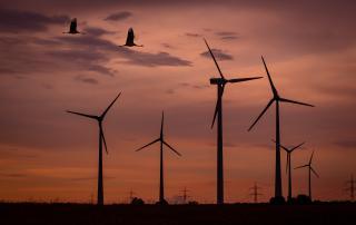 impacto biodiversidad energía eólica