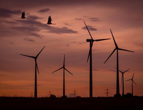 Defensa de la biodiversidad ante la rápida expansión de las energías renovables