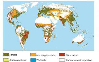 Distribución de los principales tipos de ecosistemas que podrían restaurarse